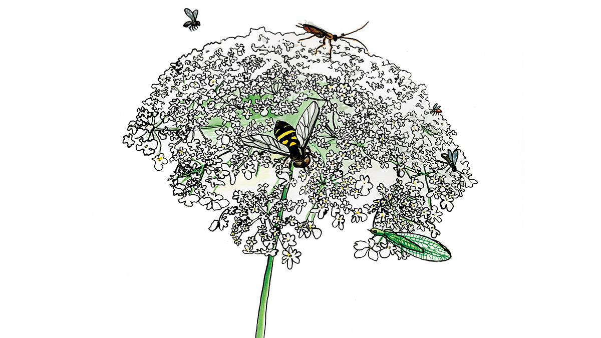 illustration of pollinators on a flower