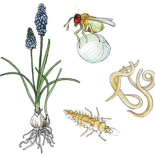 garden illustrations
