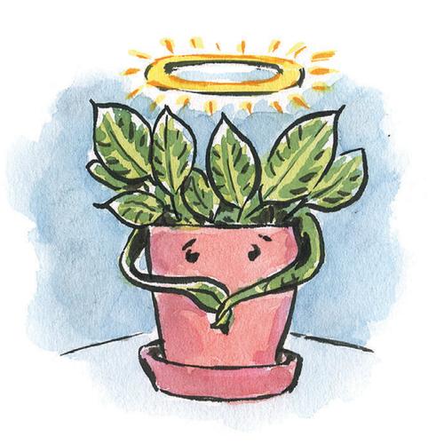 Illustration of house plant