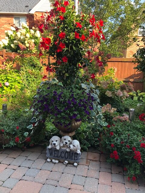 tall container planting with mandevilla