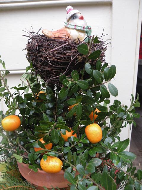 kumquats in a winter garden container