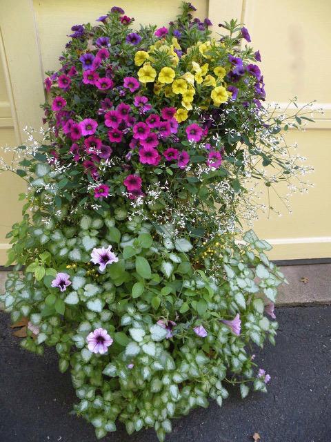 summer garden container with Lamium