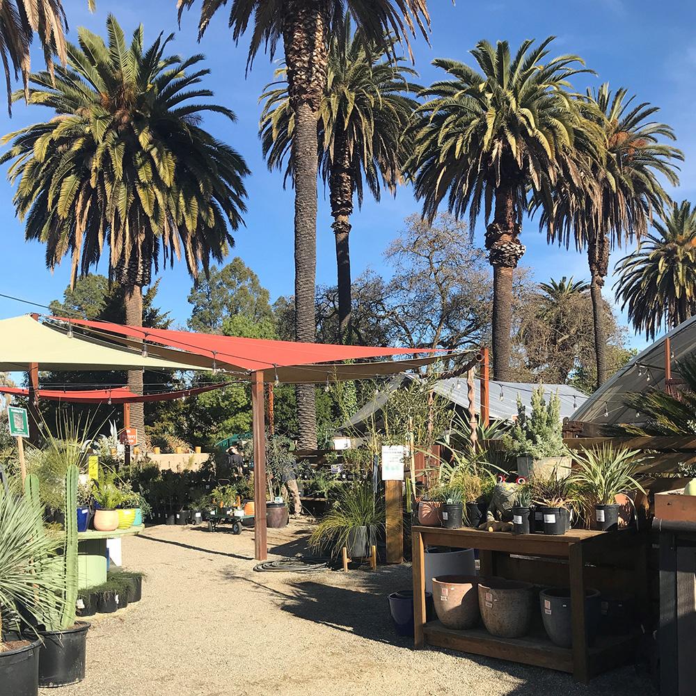 garden center at Ruth Bancroft Gardens
