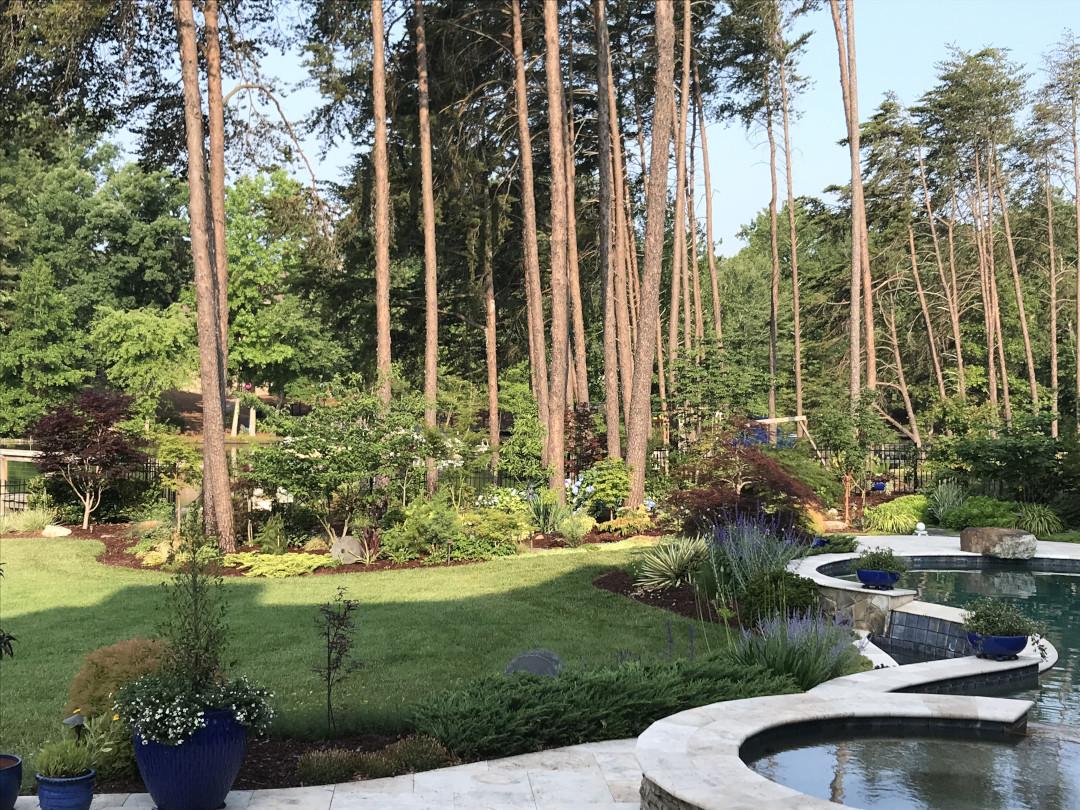 lots of pine tree trunks in the garden