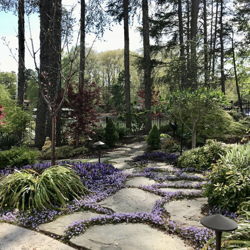 garden path filled with purple flowers