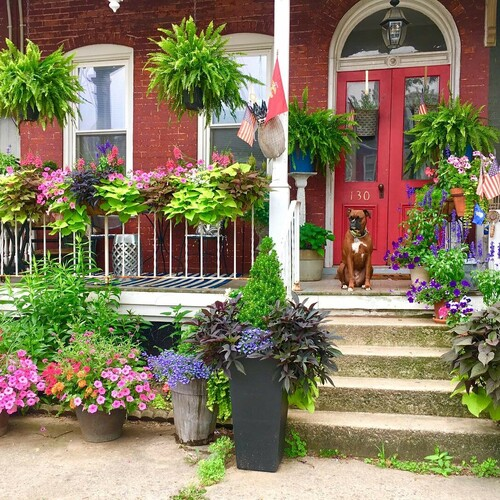 front porch covered in flowers