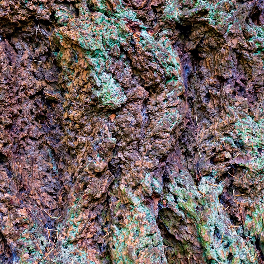 Composted fir bark