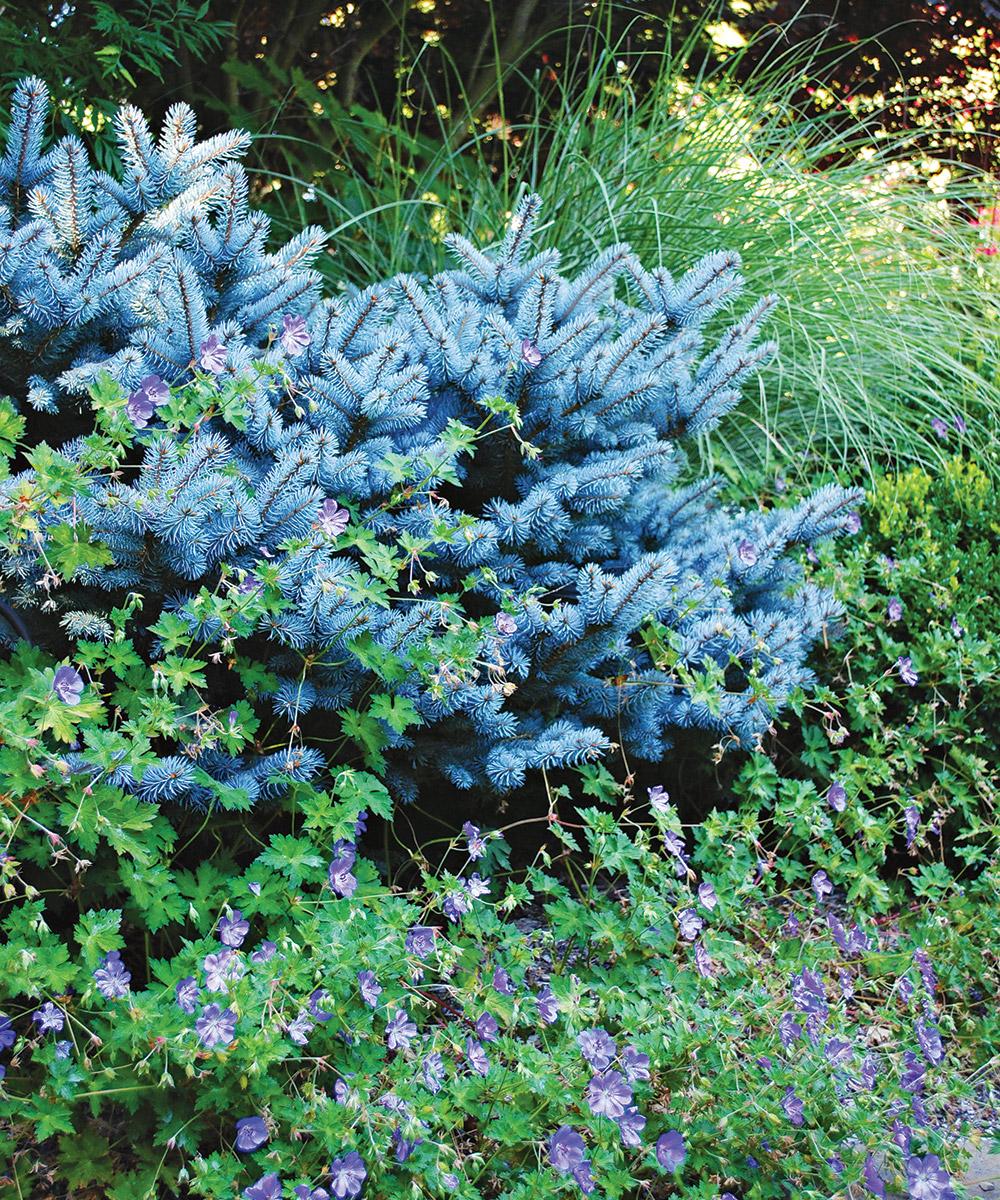 Analogous color garden schemes