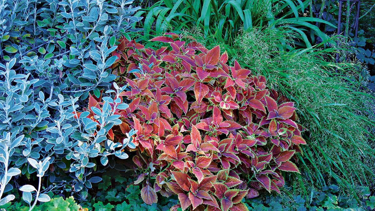 Split-complementary garden schemes