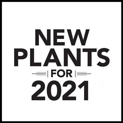 Best New Plants for 2021