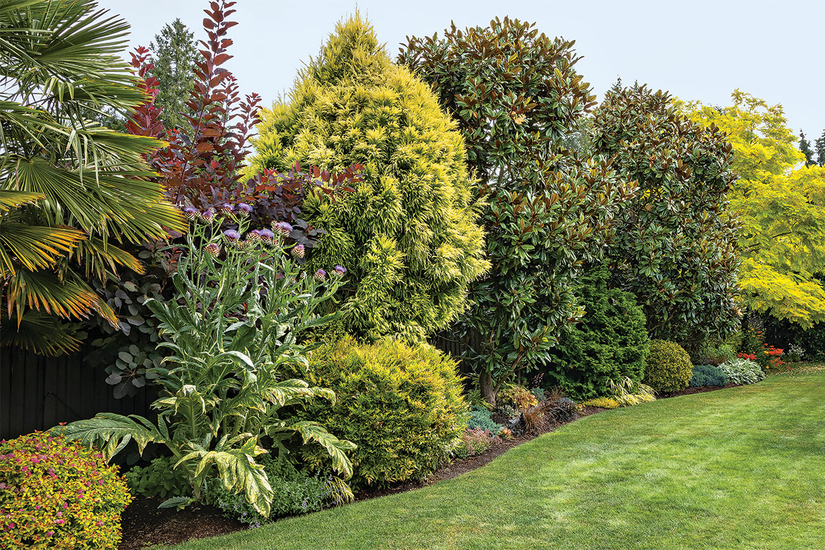 plants with two-thirds evergreens