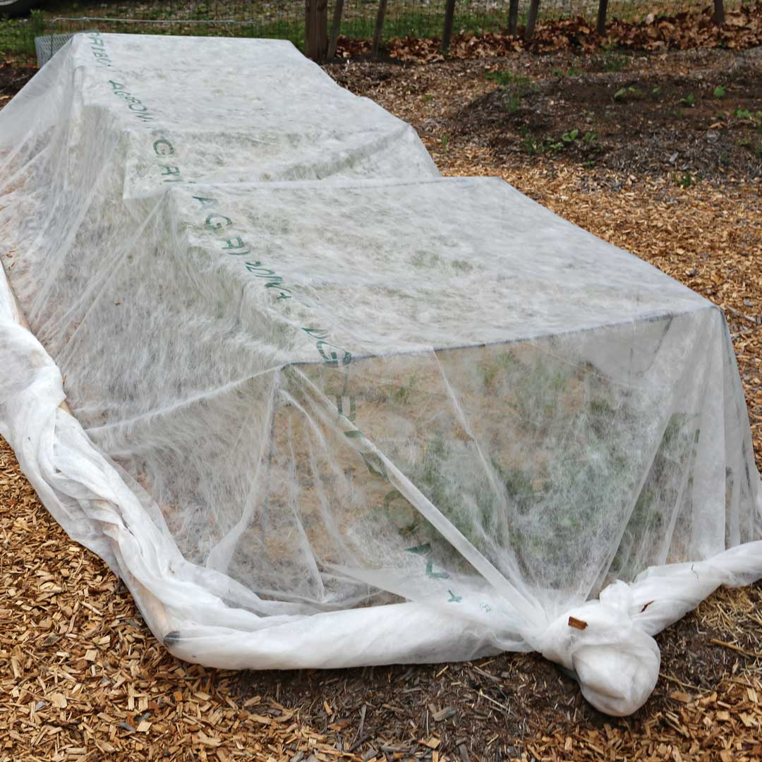 How to treat it: Row cover can help