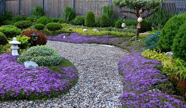 garden path bordered by creeping thyme