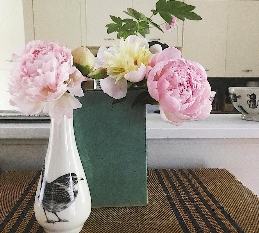 Peonies in vases