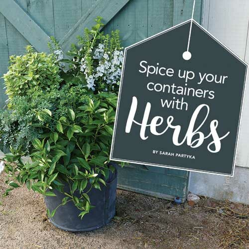 Add herbs to your container designs