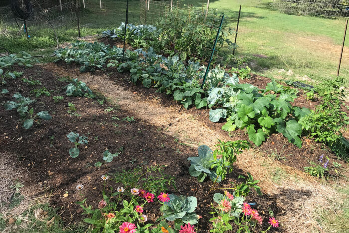 Choosing Where to Build Your Vegetable Garden in the Southern Plains