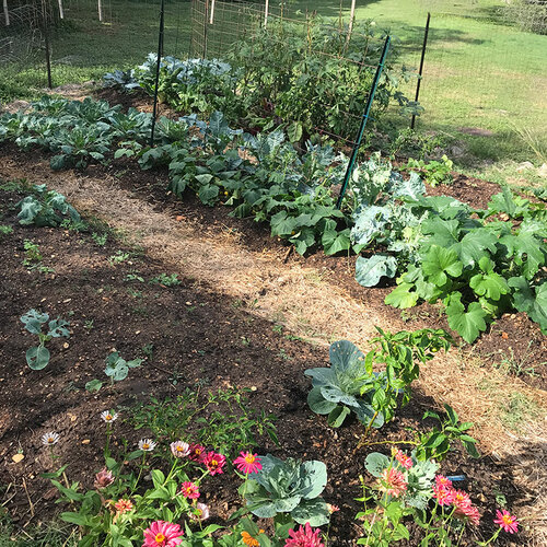 summer and fall vegetable garden