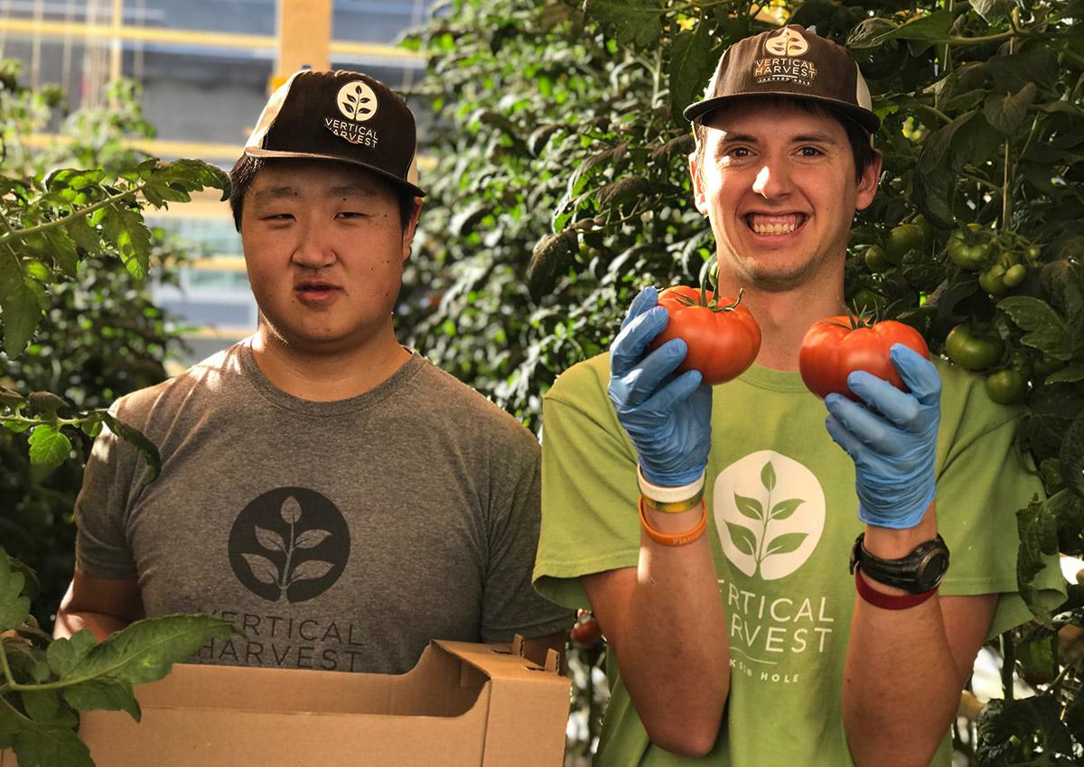 Vertical Farms employees