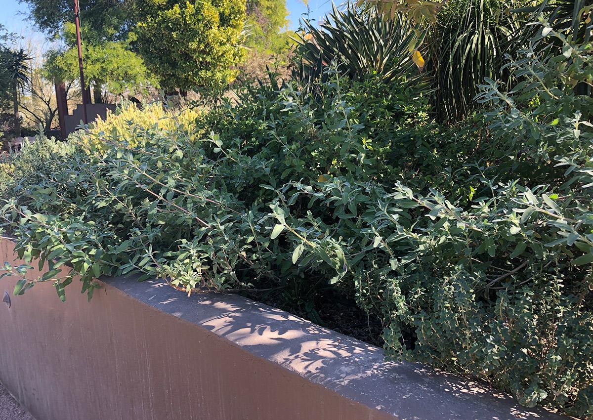 Sensory Garden at Desert Botanical Garden