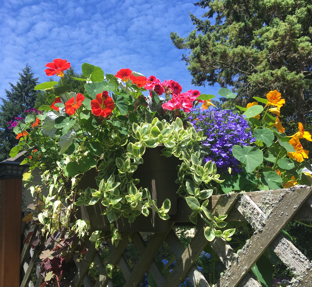Container planting on a fence