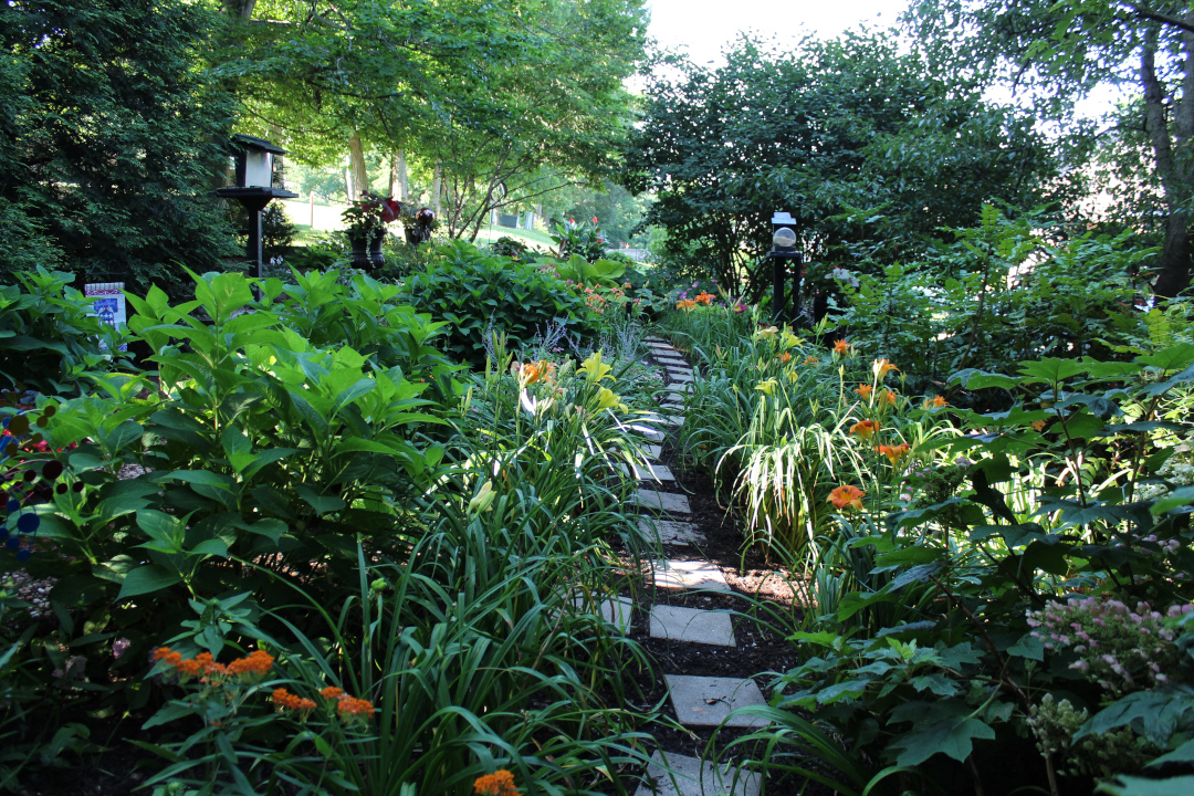 stepping stones through a dense garden