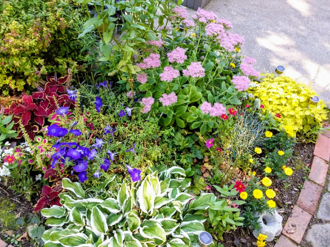garden bed with lots of different colors