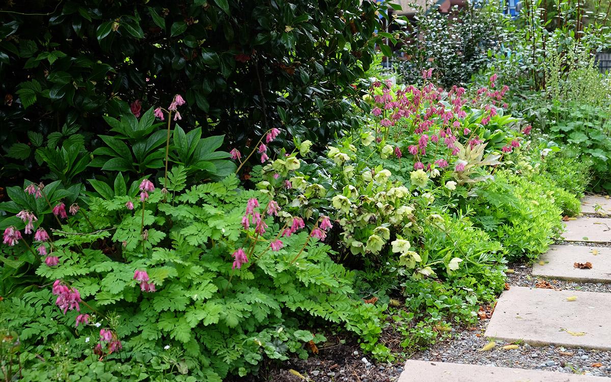 border plants in spring