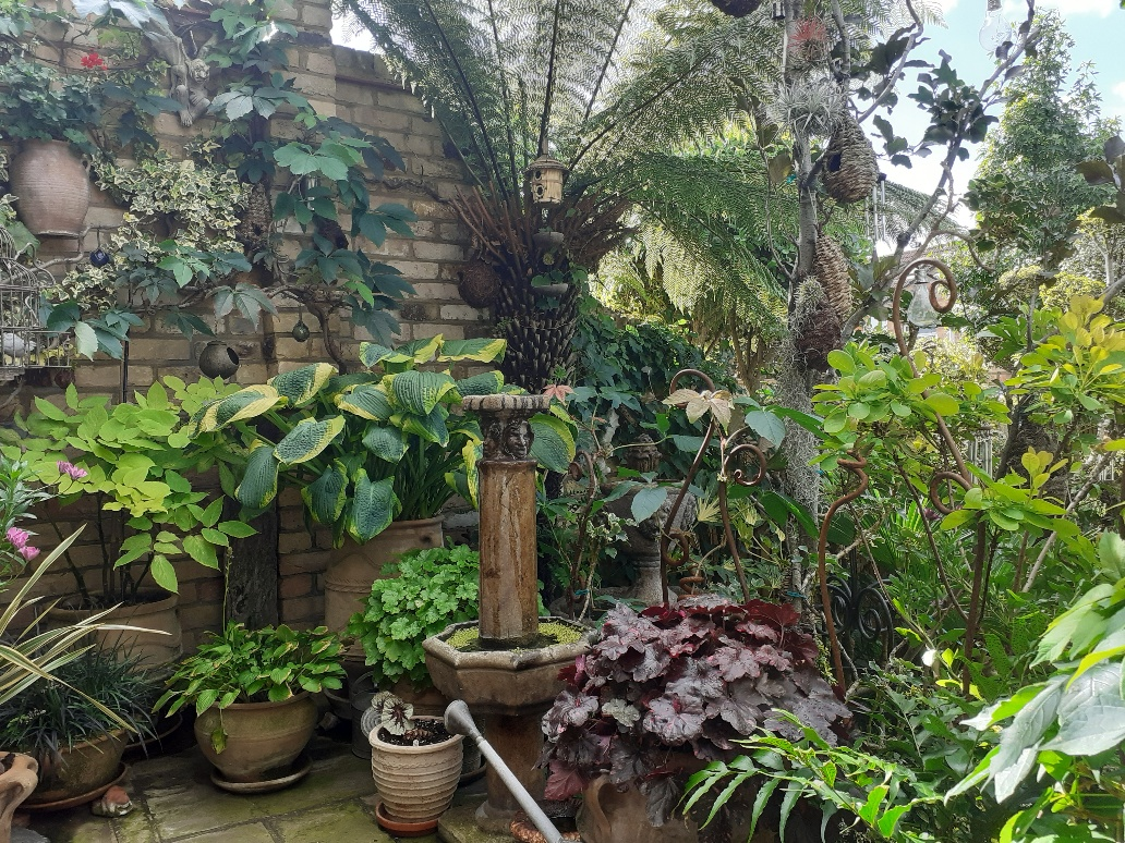 foliage plants in containers on a patio
