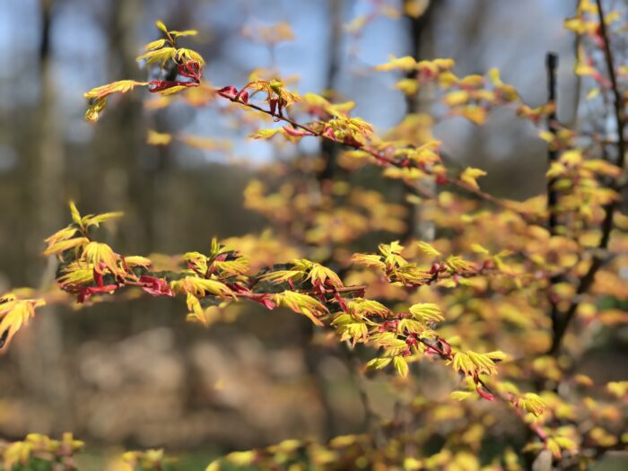 Carla's Spring Garden, Part 1