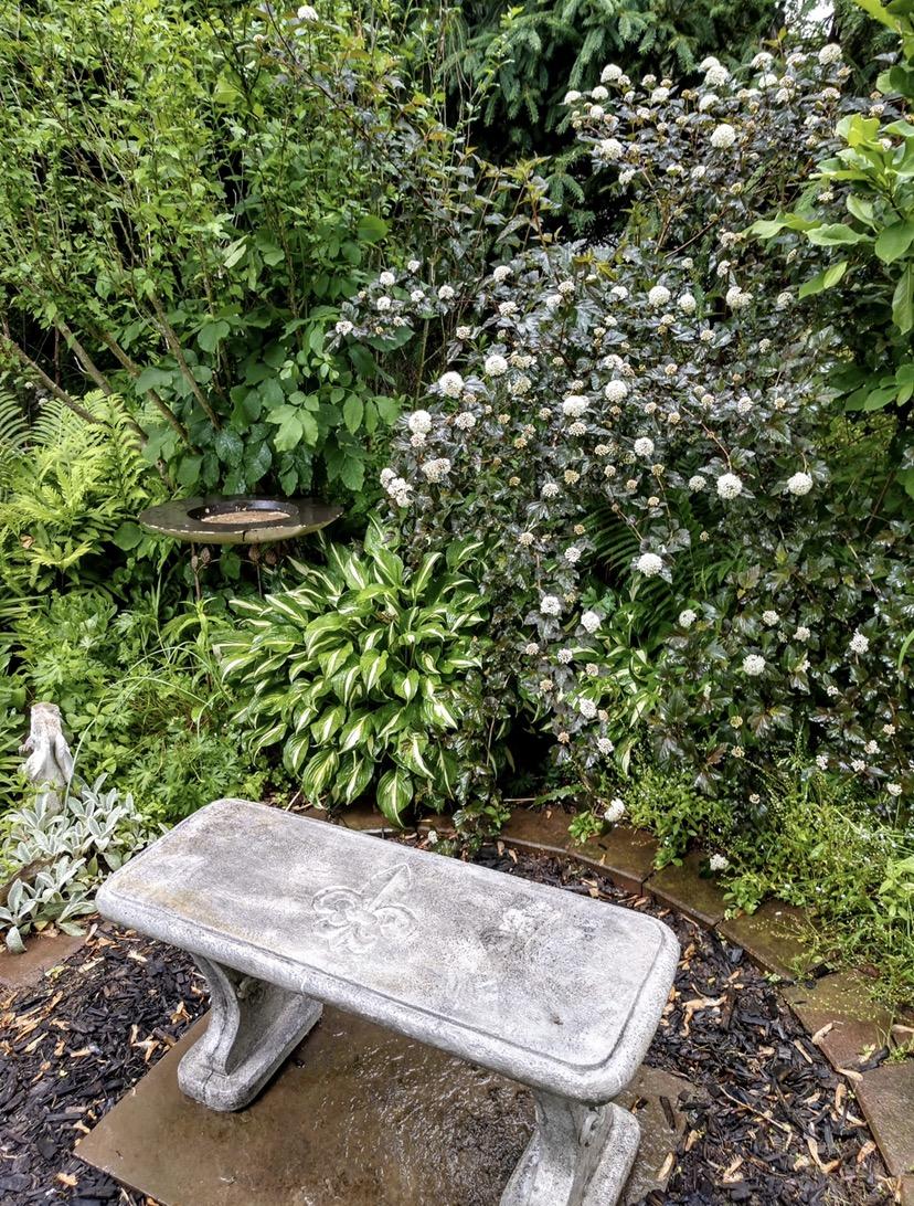 garden bench in front of a flowering ninebark