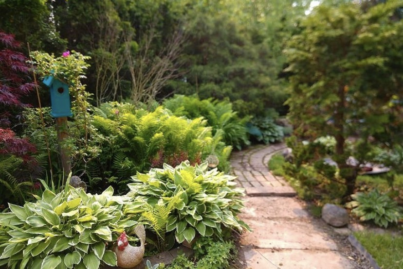 garden path lined with ferns and hostas
