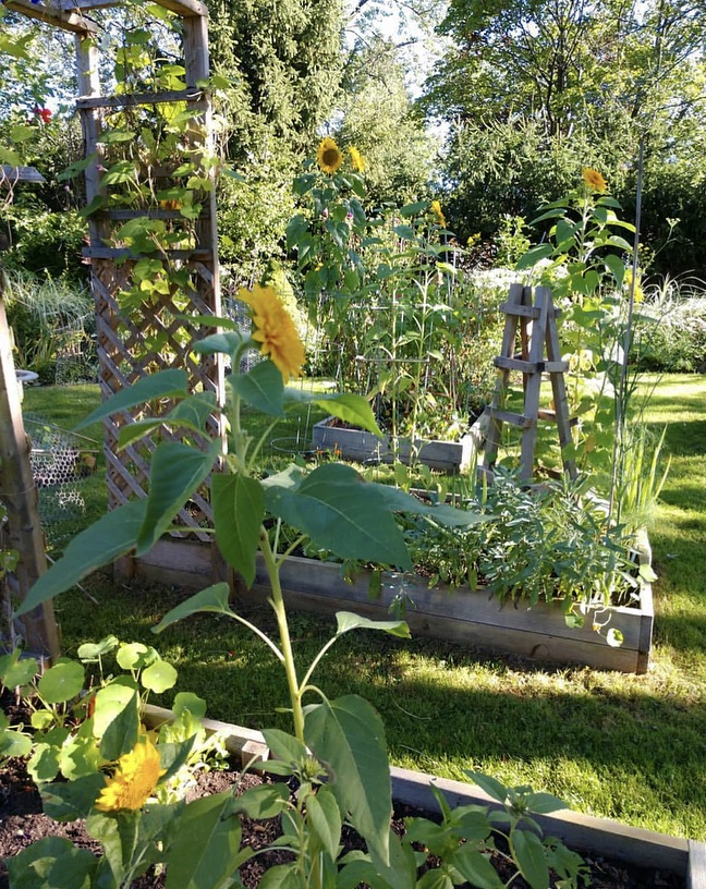 Raised beds for veggies and herbs