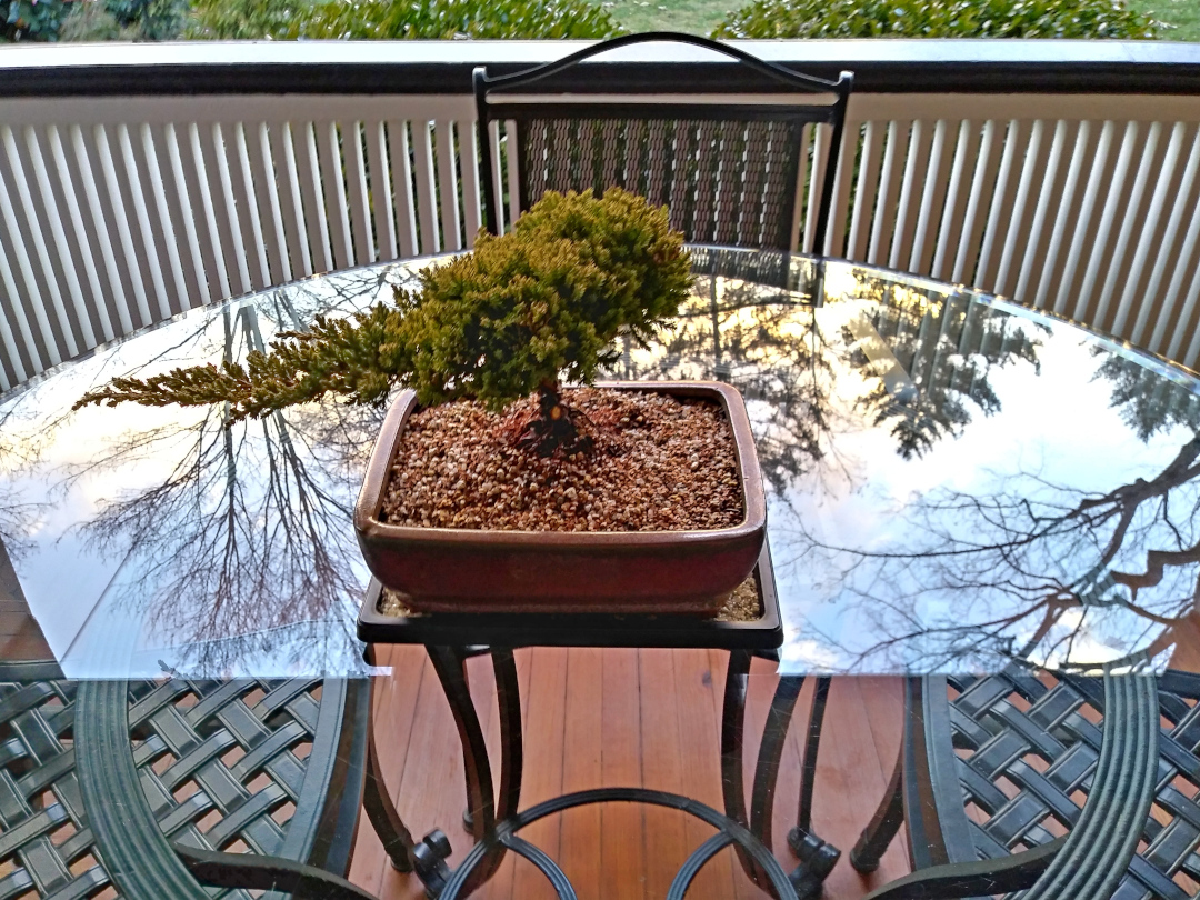 bonsai tree on a table on a porch