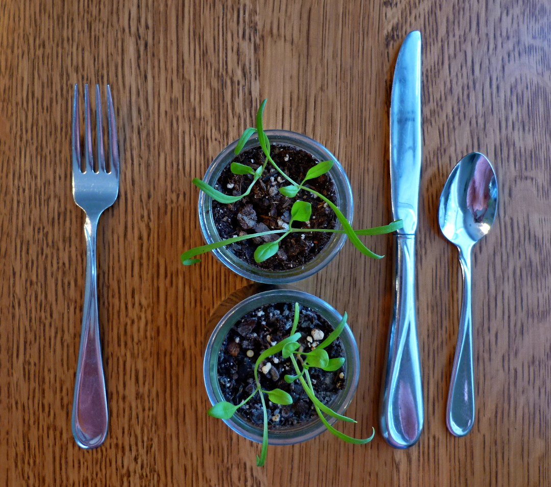 microgreens with a fork knife and spoon