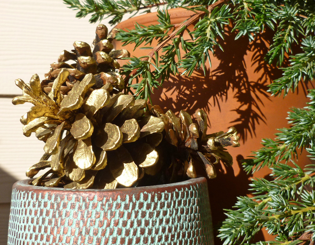 Gold pinecones next to a conifer