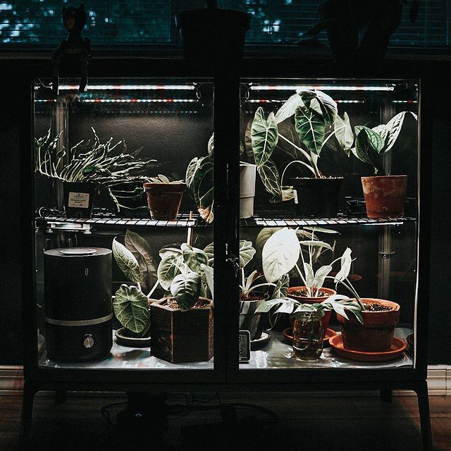cabinet used as a mini greenhouse