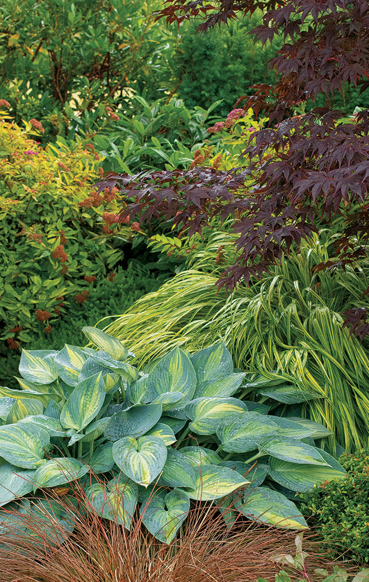 With green and red balancing each other, something has to tip the balance toward either a more exciting scene or a calmer mood. The Japanese forest grass moves toward excitement with its strongly contrasting foliage and its burst of bright color. The blades brighten the muted tones of the hosta and lighten up the visually heavy burgundy leaves of the Japanese maple.