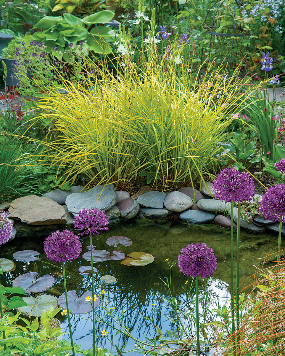 As a focal point, a water feature is hard to compete with. But with just enough yellow in it to grab the eye and hold it, Bowles' golden sedge is the perfect plant to steal the glory from this water feature. The globes of 'Purple Sensation' allium , normally the star of a planting, are supporting players.