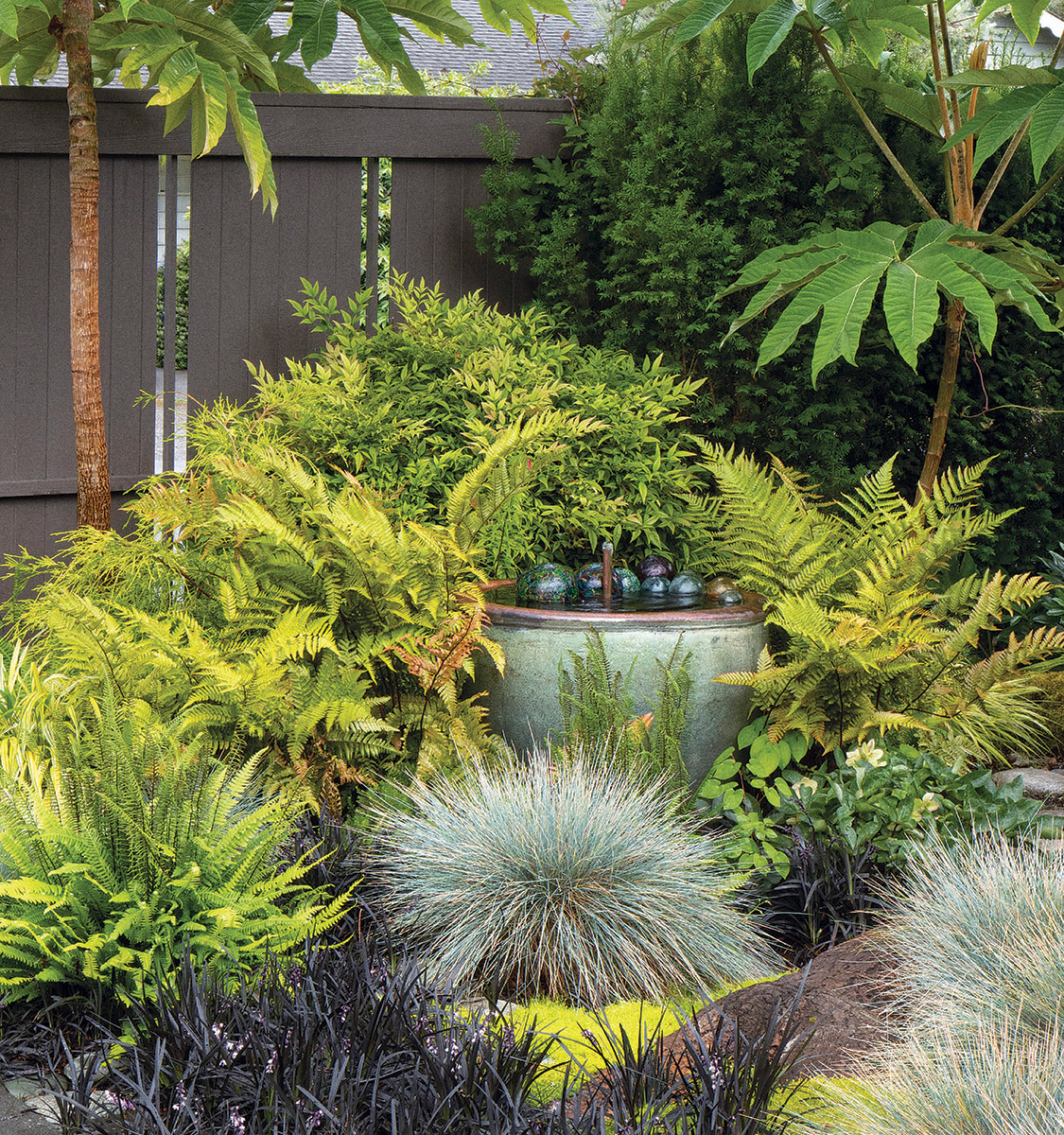 Chartreuse becomes the garden star when it leans more toward yellow or gold. These 'Brilliance' autumn ferns against the dark fence and draw your attention to the container water feature they surround. As the fronds pick up more reddish russet tones, their connection to the trunks of the fatsias becomes even stronger.