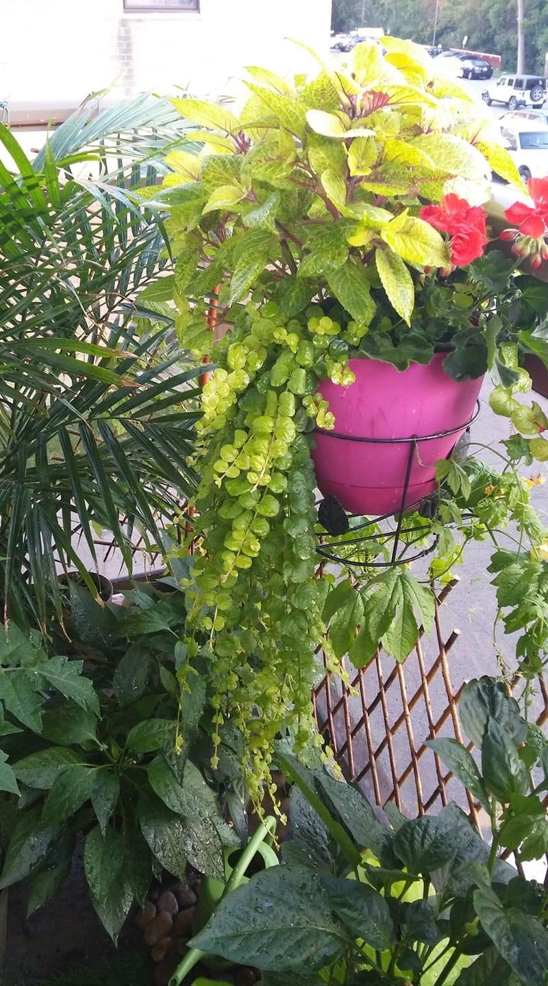 bright green container planting on a balcony