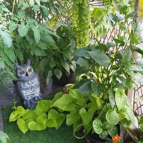 Small Balcony, Huge Garden