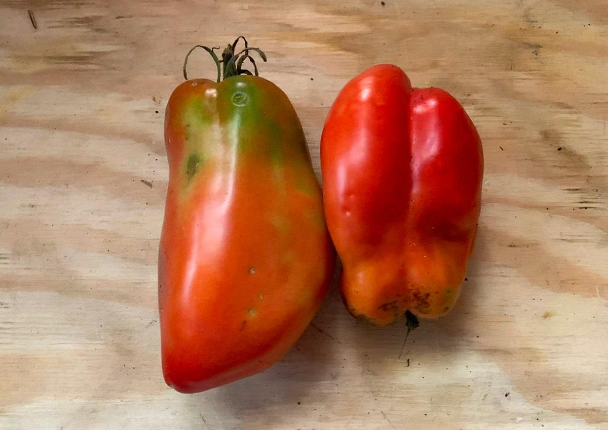 London grove tomatoes