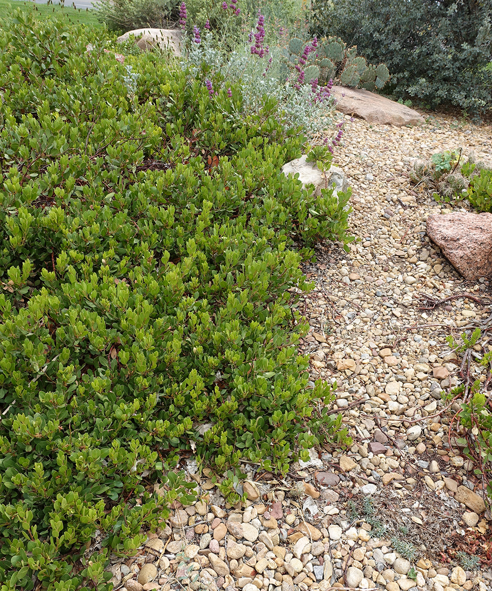 bright green ground cover