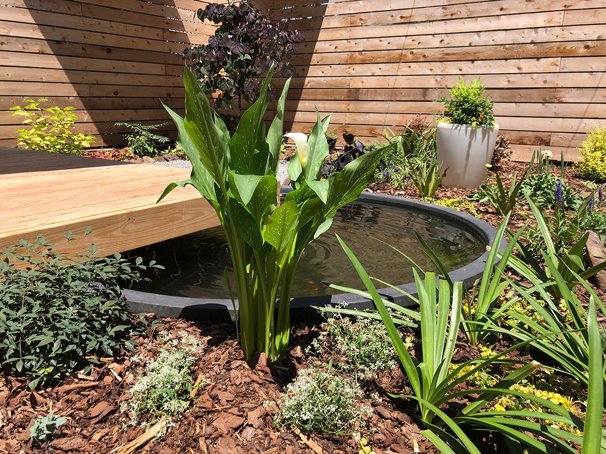 garden with organic mulch