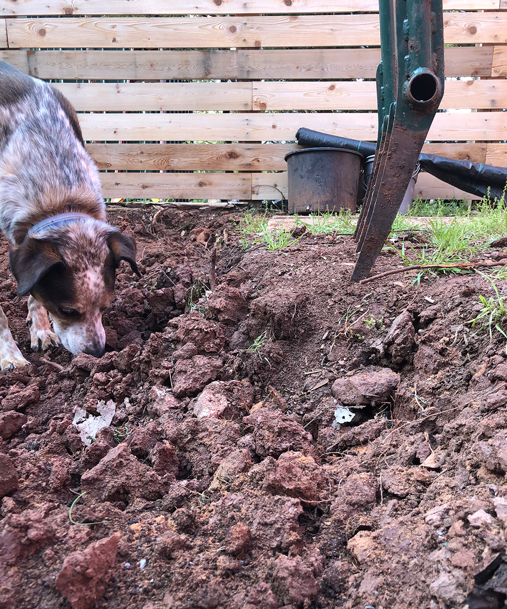 Double digging compost clay soils