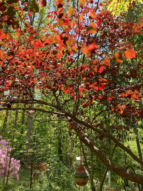 Tree with red-orange leaves in the sun