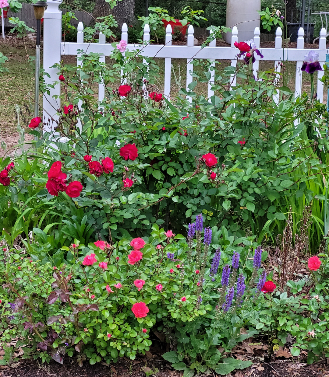 Flowery garden in front of a white fence