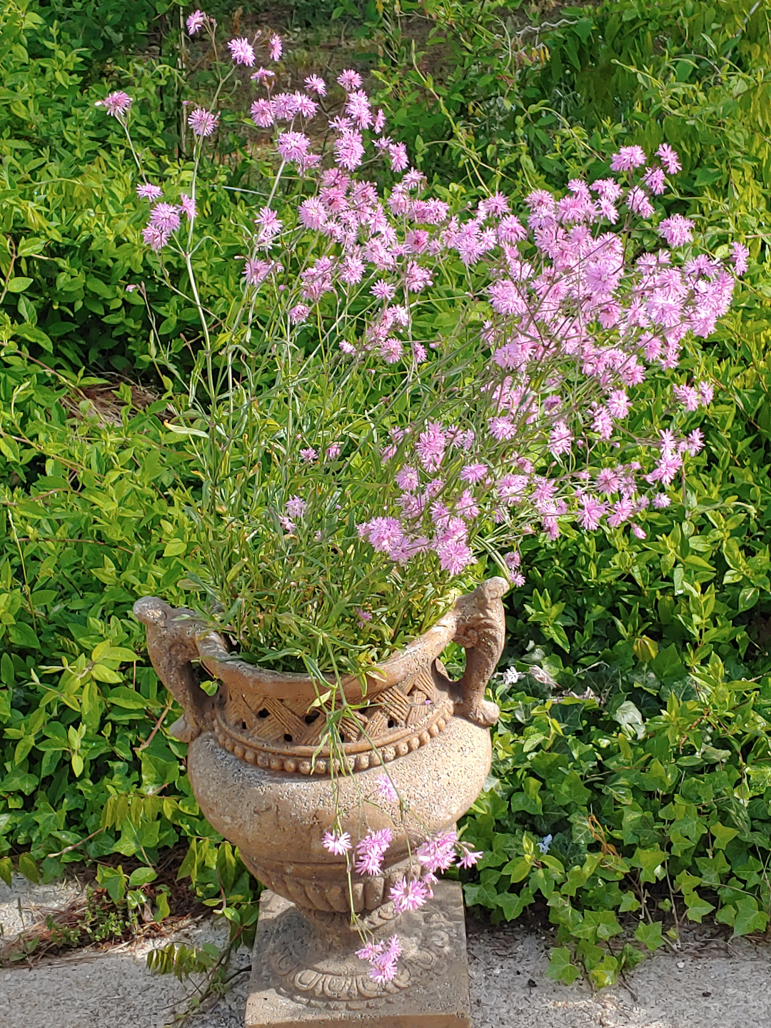 A large urn with tall pink flowers growing in it