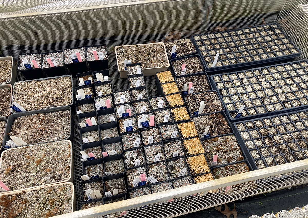 seed flats caged from pests
