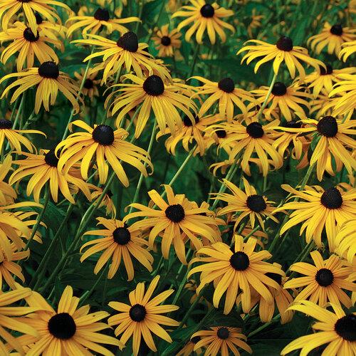 garden glossary